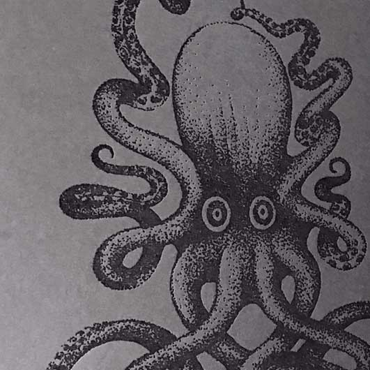 Octopus_swennjed_rotring_dessin_4