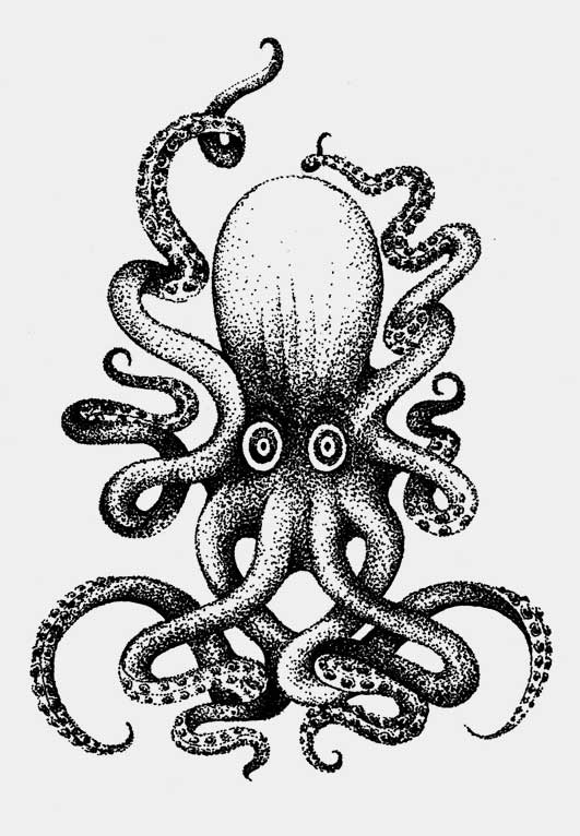 Octopus_swennjed_rotring_dessin_7